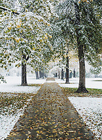 Snow in Cheesman Park in Denver, Colorado, Monday, October 9, 2017.<br /> <br /> Photo by Matt Nager