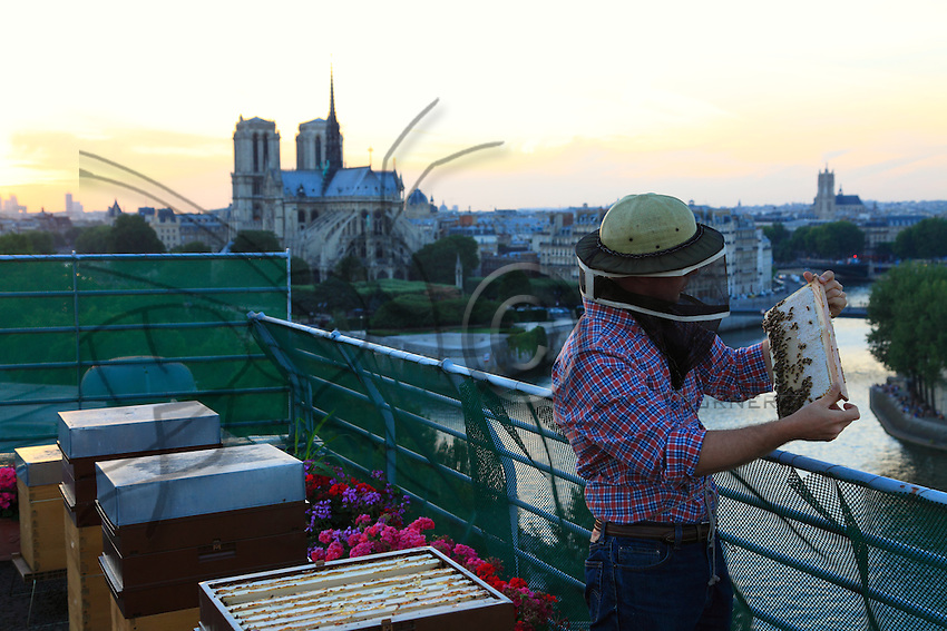 Nicolas Géant inspecting a hive's frame with the honey and bees against a backdrop of Notre Dame.