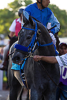 Tilde winner of the Keith E. Card Cal Cup Juvenile Fillies at Santa Anita Park in Arcadia, California on October 13, 2012.