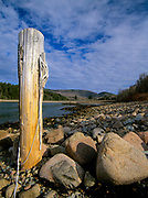 Otter Cove at low tide with a wooden pole in the foreground at Acadia National Park in Maine.