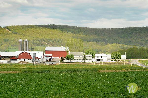 Spring farmscape, Route 880, Sugar Valley, PA.