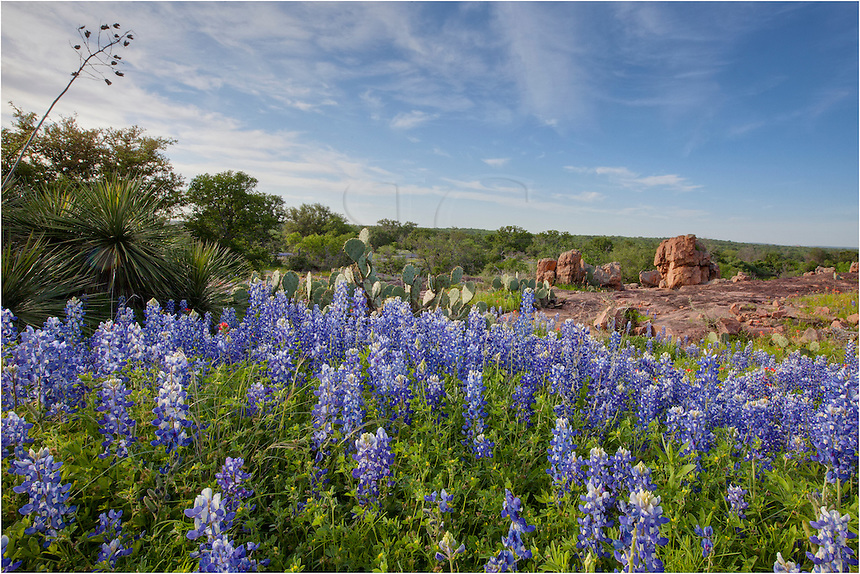 Near the end of a dirt road, I found these bluebonnets with a nice view out over the Texas Hill Country. This example is one of the reasons I like traveling Texas roads - you never know what you'll find at the end.