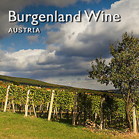 Austrian Vineyard | Pictures, Photos, Images & Fotos