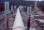 Alaska, The Trans-Alaska Oil Pipeline near Old Man Camp 1978. Pipeline was moved (jogged) due to permafrost damage on right. Arctic Alaska,
