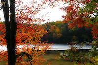 Flickers of Fall