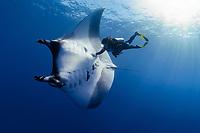 scuba diver and manta ray, Manta birostris, San Benedicto, Revillagigedo (Socorro) Islands, Mexico, East Pacific Ocean