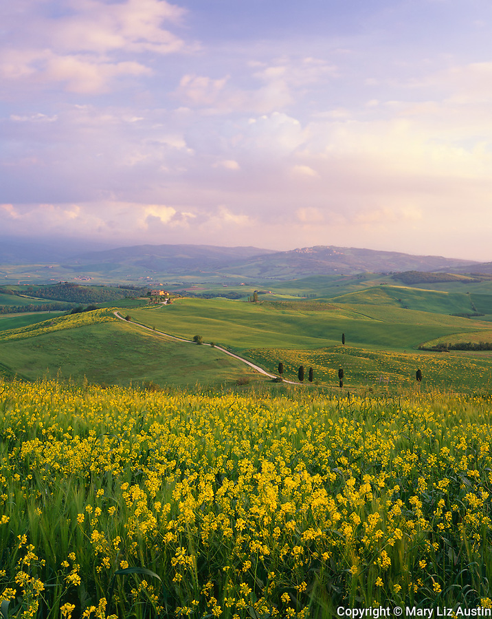 Tuscany, Italy:  Evening light on a field of blooming mustard and the distant farms and green rolling hills of Val d'Orcia near the hill town of Pienza