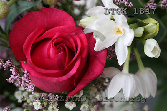Gisela, FLOWERS, photos+++++,DTGK1847,#f# Blumen, flores, retrato