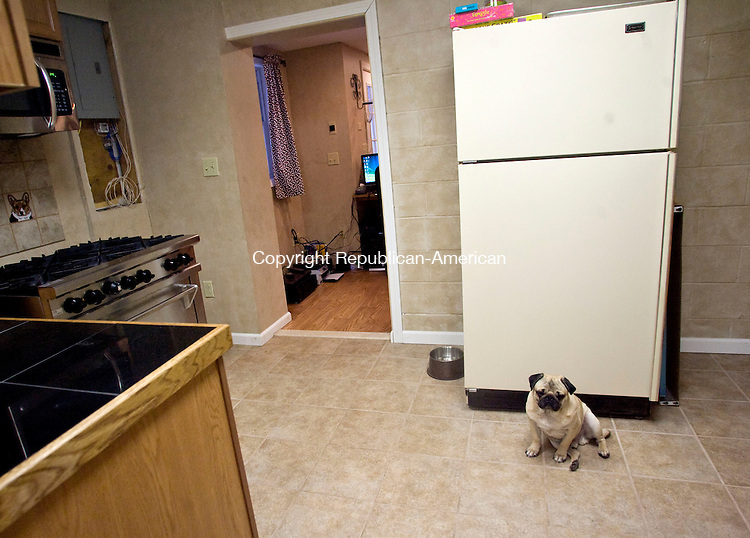 WOODBURY, CT - 07 JANUARY 2009 -010709JT04-<br /> Jack, a pug, sits in front of the refrigerator in the kitchen of the Haute Dog Hotel, a pet resort that boasts cageless rooms, TVs, and a dessert cart at bedtime, on Wednesday in Woodbury.<br /> Josalee Thrift / Republican-American