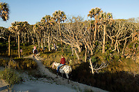 A group of riders take their horses back on a trail into the woods in Amelia Island, FL
