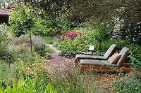 Lounge chairs under shady oak trees in back yard California native plant habitat garden, Schino