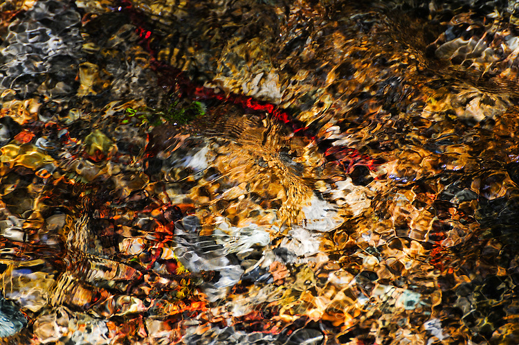 """""""AUREATE TREASURE""""<br /> <br /> There is gold in them there hills! River stones and pebbles beneath a creek, near Glacier National Park, shimmer gold and red creating a montage of design and color. River gems at their best. Light reflection and refraction. It's everything. 24 x 36 signed, original, gallery wrapped wrapped canvas $2,500. Check for availability"""