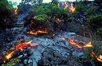 Lava flows through brush at Hawaii Volcanoes National Park.