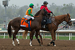 ARCADIA, CA  MARCH 10: #7 Om, ridden by Mike Smith, in the post parade of the Frank E. Kilroe Mile (Grade l) on March 10, 2018, at Santa Anita Park in Arcadia, CA(Photo by Casey Phillips/ Eclipse Sportswire/ Getty Images)