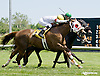 Ephyra winning at Delaware Park racetrack on 6/7/14