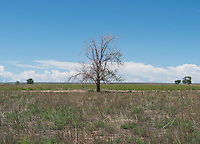 Dried up and abandoned farm land in Crowley County, Colorado, Thursday, May 19, 2016. Crowley County, once a thriving agricultural community with over 50,000 acres of farm land, sold it's water rights the City of Aurora for municipal use and now farms a little more than 5,000 acres of land. The result has seen dried and dead farm land and abandoned homesteads. Crowley County represents a dire look at how mismanaged water rights can have devastating effects on an already drought prone region.<br /> Photo by Matt Nager