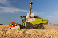 Harvesting Winter Barley in the Lincolnshire fens<br /> &copy;Tim Scrivener Photographer 07850 303986<br />      ....Covering Agriculture In The UK....
