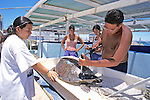 Rachel, Marissa, Tony & Melania Measuring Black Sea Turtle Measuring Black Sea Turtle
