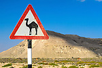 Watch out for camels road sign, Oman, Middle East