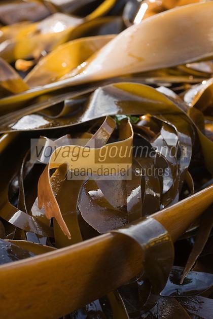 Europe/France/Bretagne/29/Finistère/Plouguernau: Le goémonier :Jacky Galliou récolte les algues