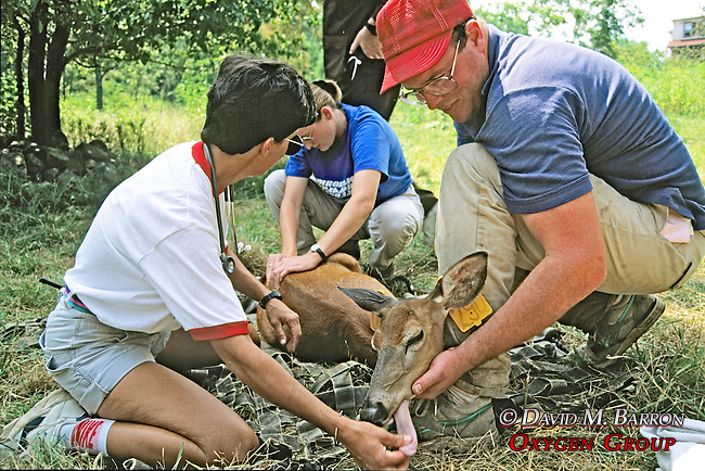 Taking Vital Signs Of Deer