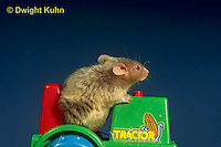 MU60-081z  Pet mouse