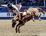 The bronc Red Man of the Beutler & Son Rodeo Company proves to be a hand full for PRCA cowboy Shell Roberson during the prestigious Cowboy Christmas run at the Greeley Independence Stampede July 29th in Greeley, Colorado.