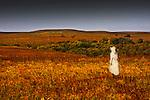 A woman wearing a long white dress walks through the golden field of the Kansas Flint Hills.