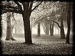 wood, tree, fog, mist, lost, scared, fear, eerie, shapes, imagination,