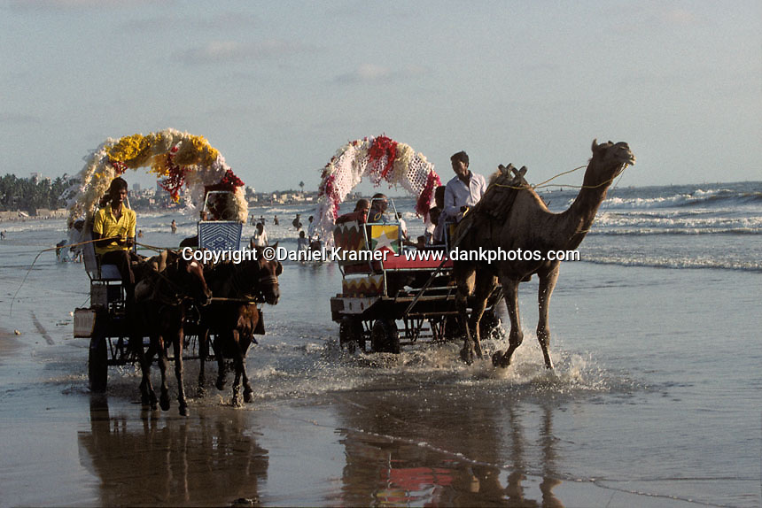 Horses and camels pulling carts in the surf of Juhu Beach in Mumbai in 1996.