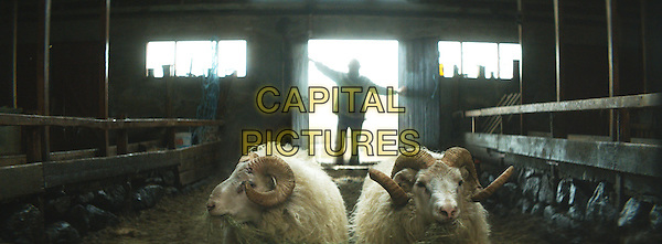 Rams (2015) <br /> (Hrutar) <br /> *Filmstill - Editorial Use Only*<br /> CAP/KFS<br /> Image supplied by Capital Pictures