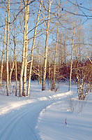 Cross-country ski trail near Lake Superior. Ironwood Michigan USA
