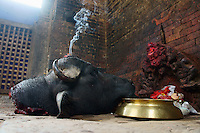 Nepal - days of goddess  Durga