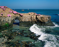 Eroded arch and flowering Ice Plants on the shore of the Pacific Ocean; Santa Cruz, CA