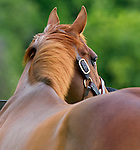 Thoroughbred horse farms, stallions, mares, etc.