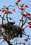 Indian vulture, India