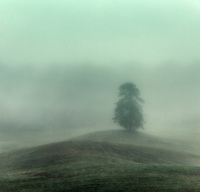 Soft morning mist enshrouds a single tree and rolling hills, New York, USA