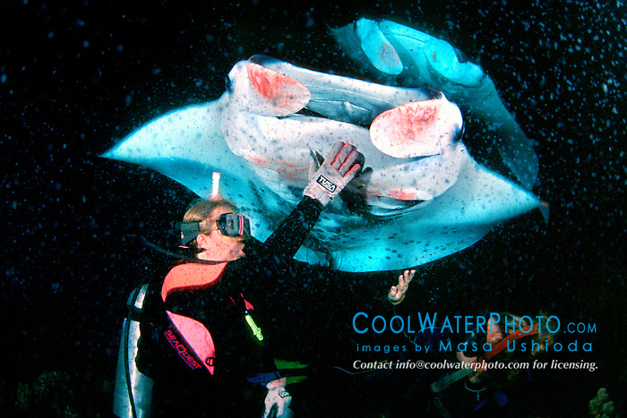 woman scuba divers and reef manta rays or coastal mantas, Manta alfredi, feeding at night, Kona Coast, Big Island, Hawaii, Pacific Ocean, MR - model released
