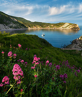 Lulworth Cove with Red Valerian wildflowers and small boat. Dorset. Jurassic Coast, England