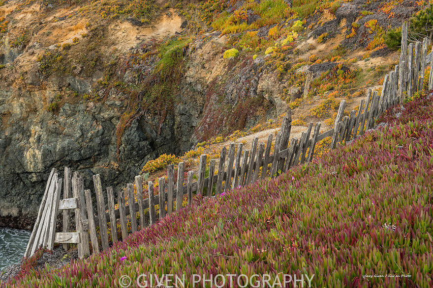 Old fence and ice plants, Sonoma Coast