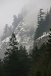 Snowy Cliffs and Forest Along the Columbia River Gorge, Oregon