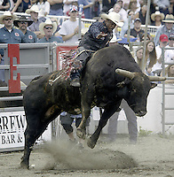 "29 Aug 2004: PRCA Rodeo Bull Rider Mike Moore ranked 50th in the world riding the bull ""Hard Head""  during the PRCA 2004 Extreme Bulls competition in Bremerton, WA."