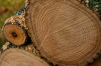 Freshly cut tree stump with growth rings.