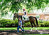 Onepointhreekarats before The John W. Rooney Memorial Stakes at Delaware Park on 6/8/13