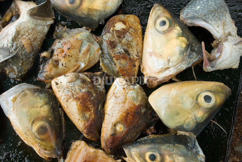 "Fish heads fry in preparation for ""Queen Victoria's"" funeral feast."