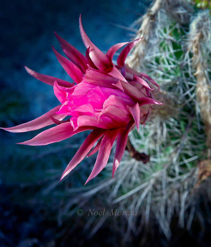 exotic and unusual flowers  noel morata photography, Beautiful flower