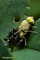 1D05-001b  Fruit Fly - adult