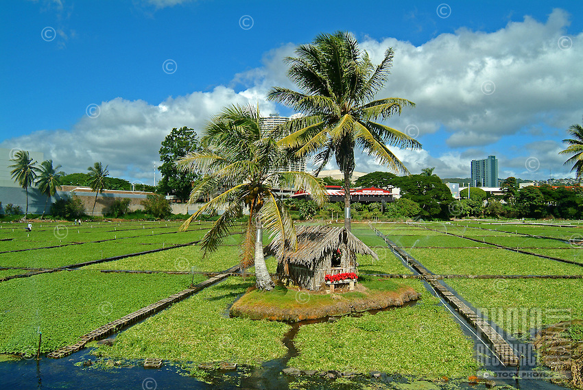 A grass shack island with palm trees is the centerpiece at a watercress farm in front of Pearlridge Shopping Center in Pearl City, O'ahu.