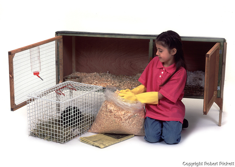 Young girl, aged 8 years old, cleaning guinea pig hutch and filling with sawdust bedding, studio, cut out, white background, pet