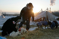 Wednesday March 7, 2007    As the sun rises, two veterinarians check Mike Williams' dogs at the Nikolai checkpoint on Wednesday in 35 below temperatures